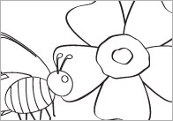 Minibeasts Colouring In Sheets – Mindfulness Resource